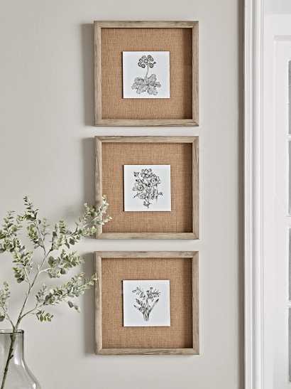 Three Botanical Sketched Prints