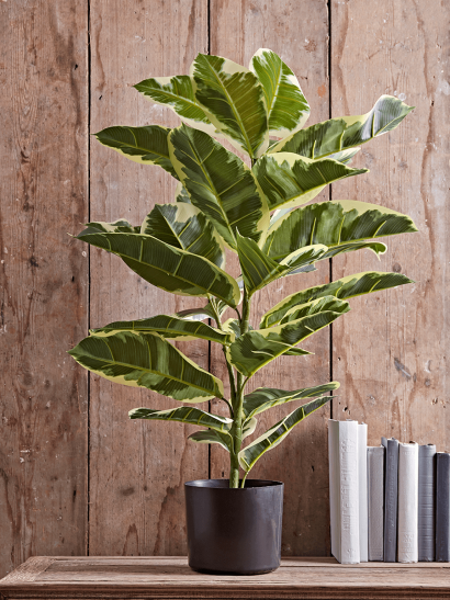 NEW Faux Potted Rubber Plant - Small