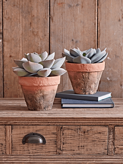 Two Faux Potted Succulents