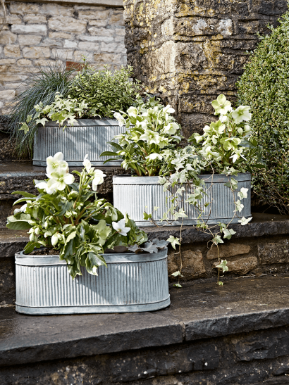 Three Oval Trough Planters
