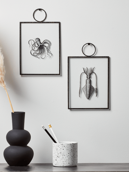 NEW Two Molluscs Framed Prints