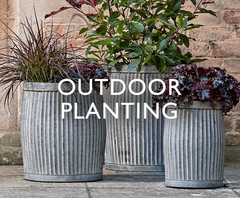 Outdoor Planting